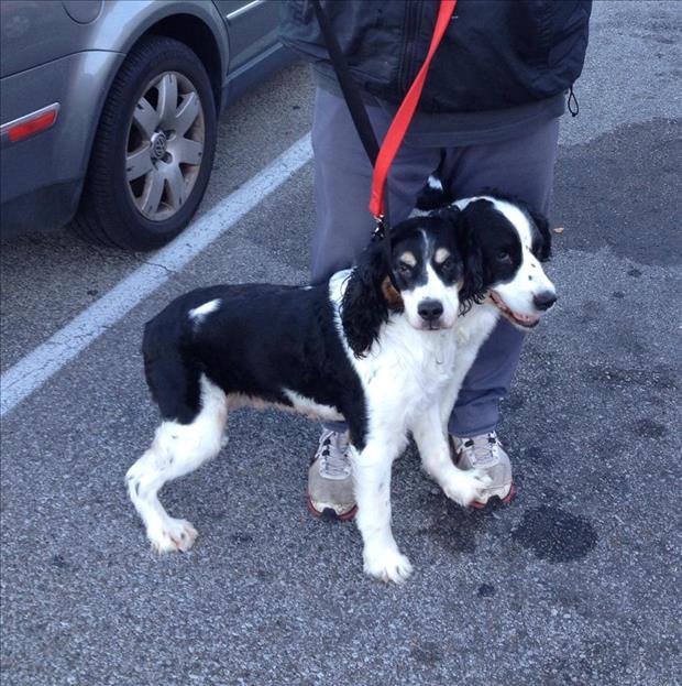 Un perro en la calle ante los pies de su amo que parece tener dos cabezas