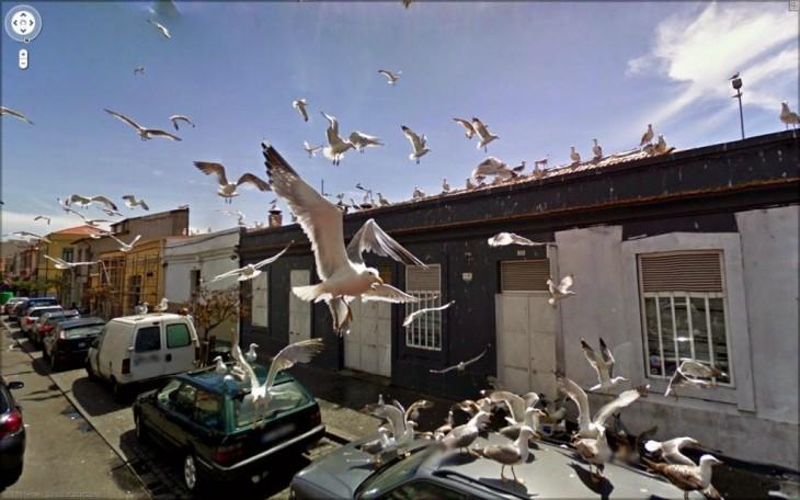 Fotografía de muchas aves sobre un coche