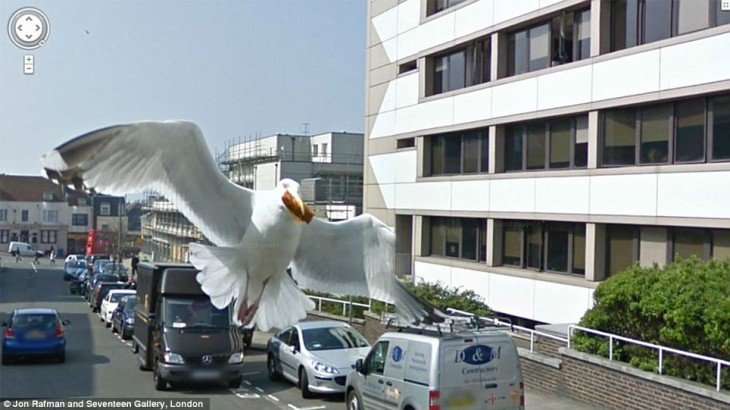 Fotos de Google Street View que parece ser una gaviota gigante volando sobre la ciudad