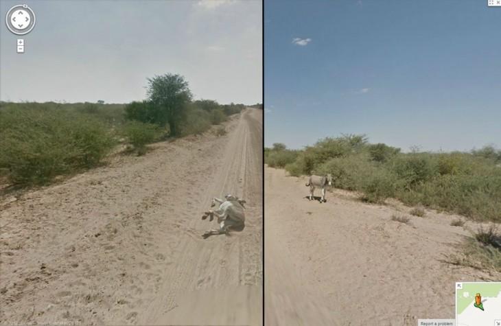 Burro que parece haber sido asesinado por la camioneta de Google Street View