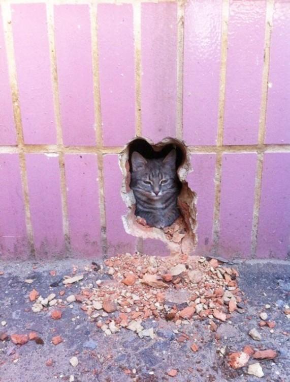 Gato detrás de un agujero hecho con la figura de su cabeza