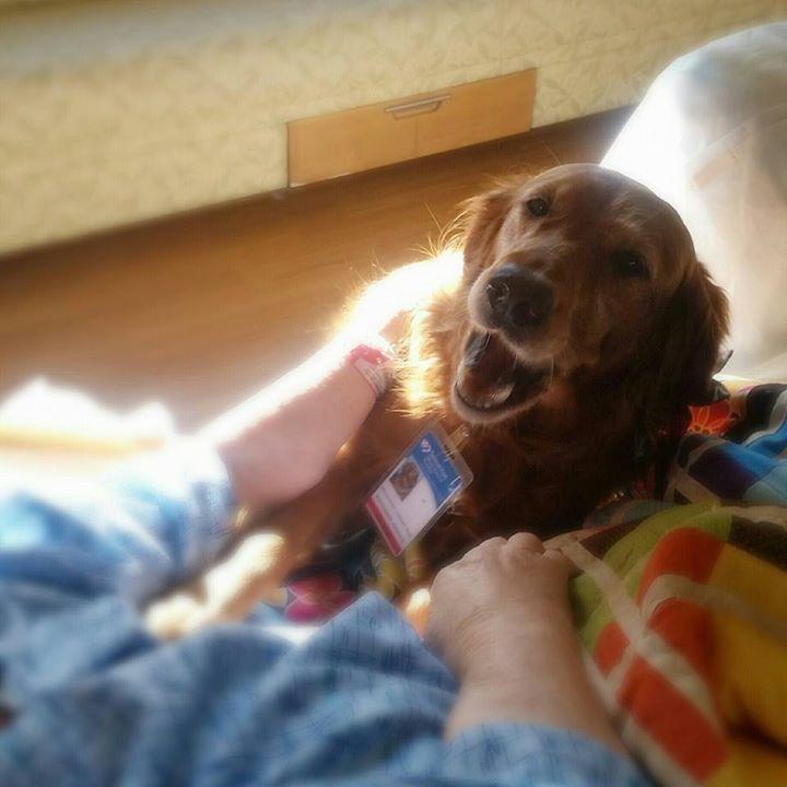 Perro de terapia mirando hacia una persona enferma en un hospicio