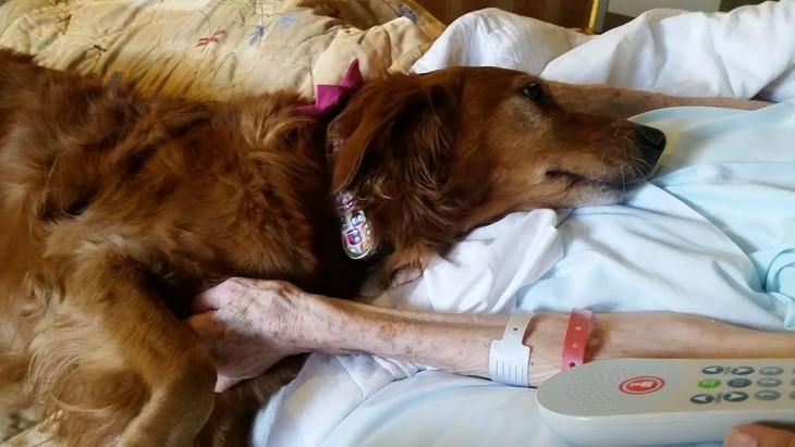 Jj un perro de terapia en un hospicio