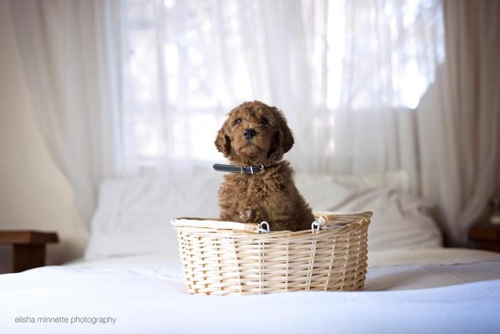 Fotografía de un perro dentro de una pequeña canasta