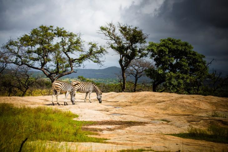Paisaje con animales en África