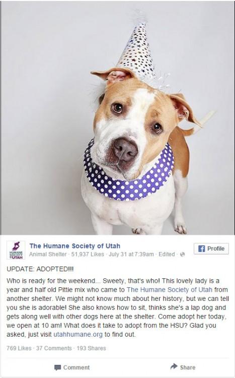 Captura de pantalla de una página de Facebook en la que se muestra una perrita pitbull