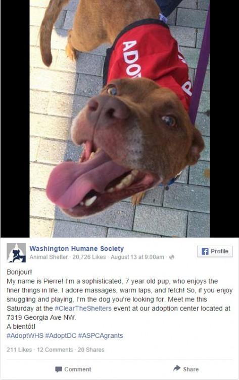 Captura de pantalla de una página de Facebook en la que se muestran perros Pit Bull