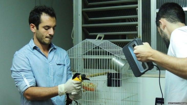 Especialistas encargados de implantar una prótesis en el pico de un tucán en Brasil