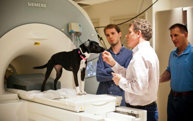 Personas haciendo estudios a un perro