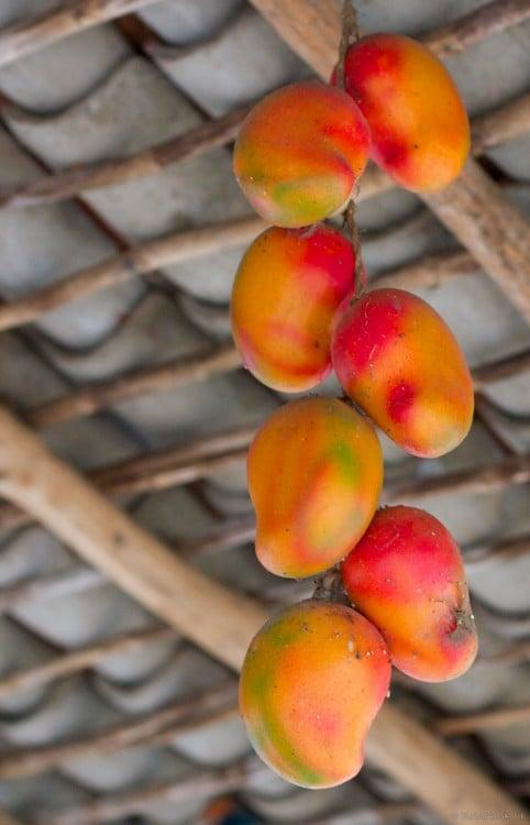 Mango de Nicaragua