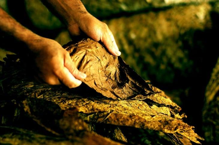 Manos produciendo cigarros en la República Dominicana