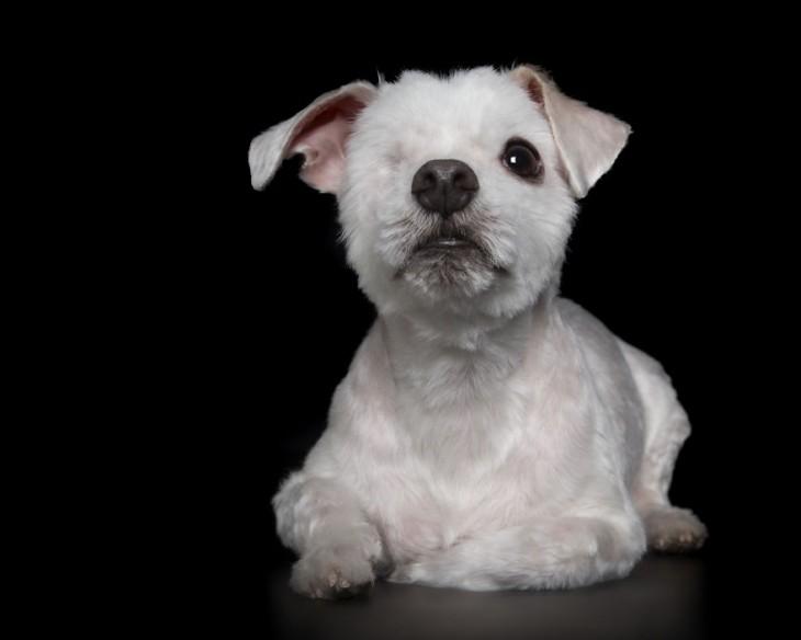 imagen de un perrito con un sólo ojo