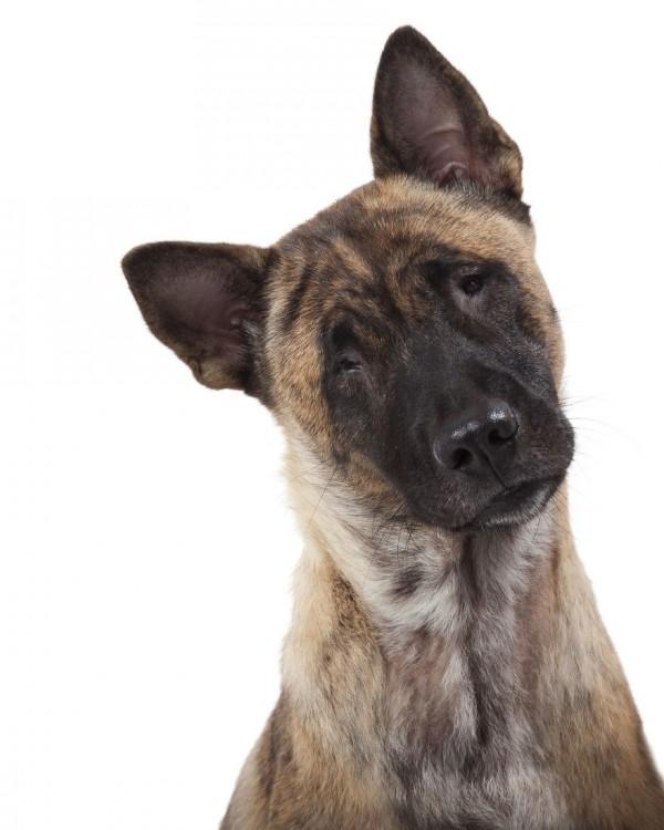 fotografía de una perrita sin ojos