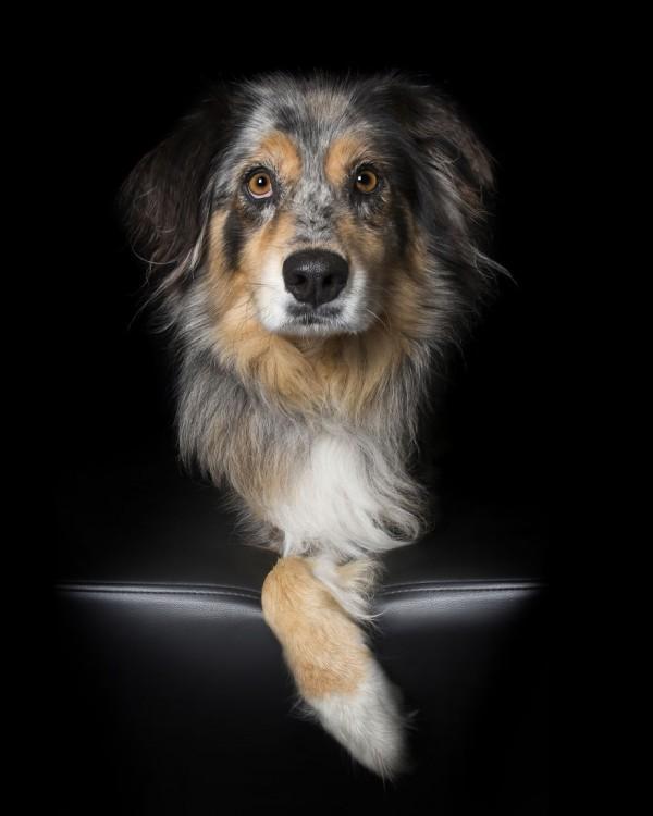 Fotografía de un perro sobre un sillón con una sola pata