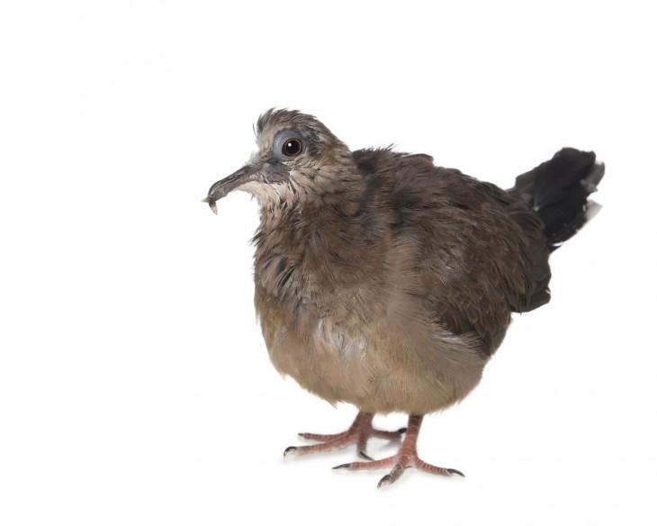 Imagen de una paloma con un solo ojo