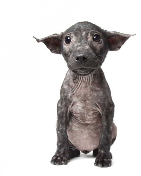 Fotografía de un perro con sarna