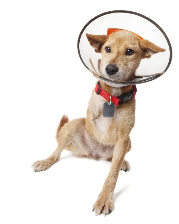 Cachorro con 3 patas y un aro en su cabeza