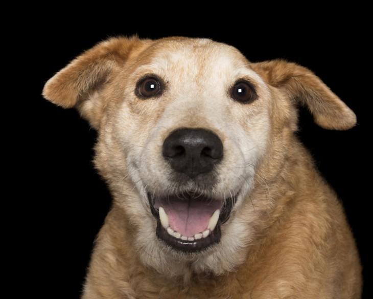 Imagen de la cara de un perro de color café