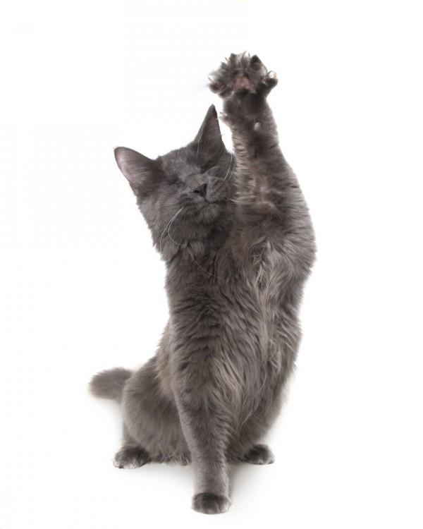 imagen de un gato sin ojos con una pata hacia arriba