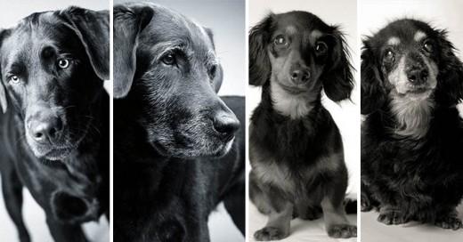 La fotógrafa residente de Massachusetts Amanda Jones ha pasado veinte años tomando fotografías de perros. Lo que la llevó a reunir una colección de retratos de perros a la que llamó Dog Years: Faithful Friends Then & Now; la cual está dedicada a su perrita dachshund Lily, la cual murió durante la realización de su obra.