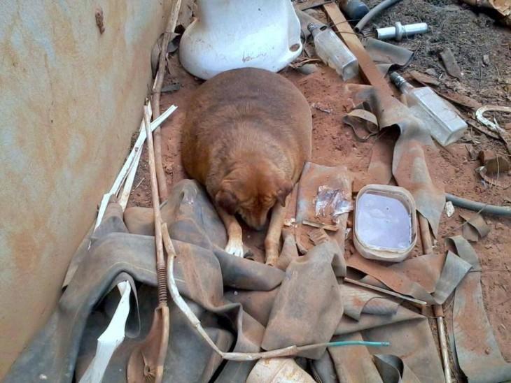 Cachorro obeso en brasil en medio de escombro