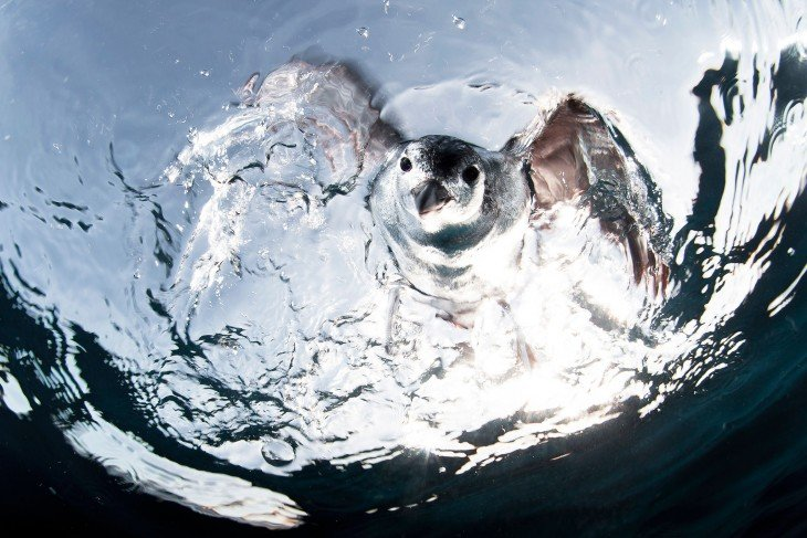 una gaviota de agua bajo el agua