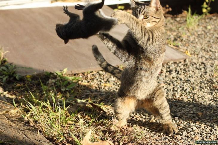 gato ninja avientaj a la ardilla