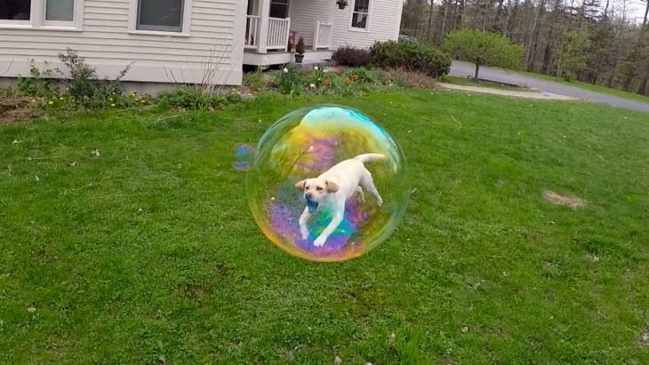 perro atorado en una burbuja