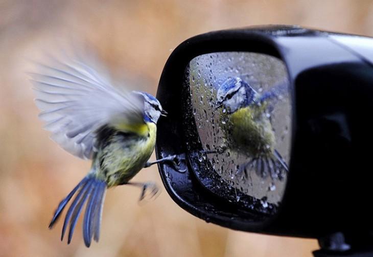 colibri reflejado en el retrovisor
