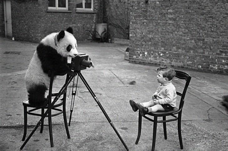 Panda simulando que esta tomando una foto a un niño sentado en una silla