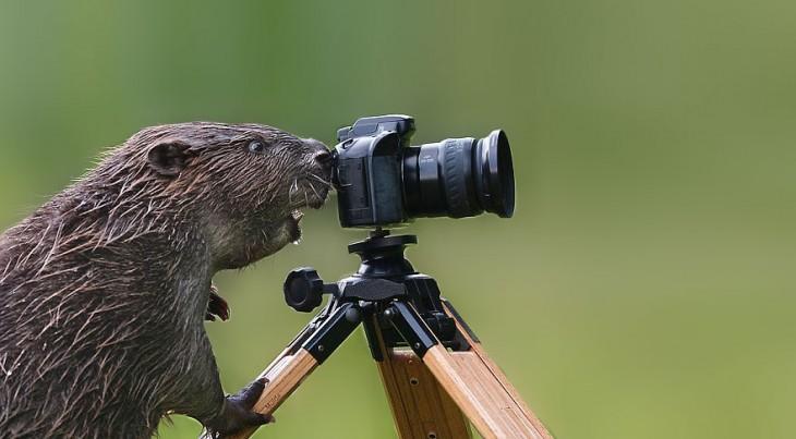 Castor tomando una fotografía