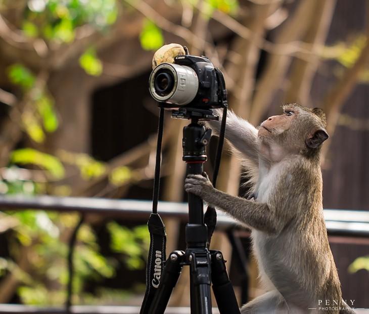 chango moviendole a una cámara fotográfica