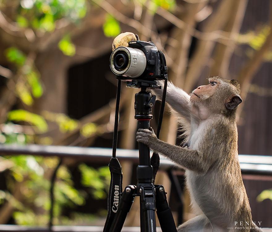 25 animales que quieren ser fot243grafos