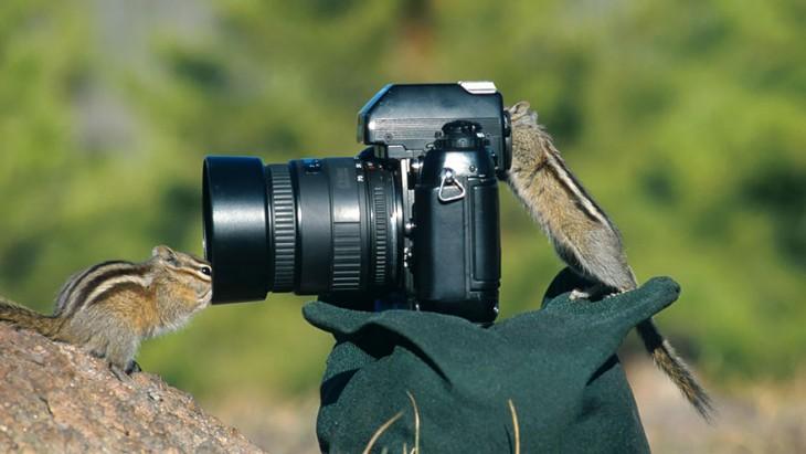 Ardilla que simula estar tomando una fotografía a otra ardilla en una piedra