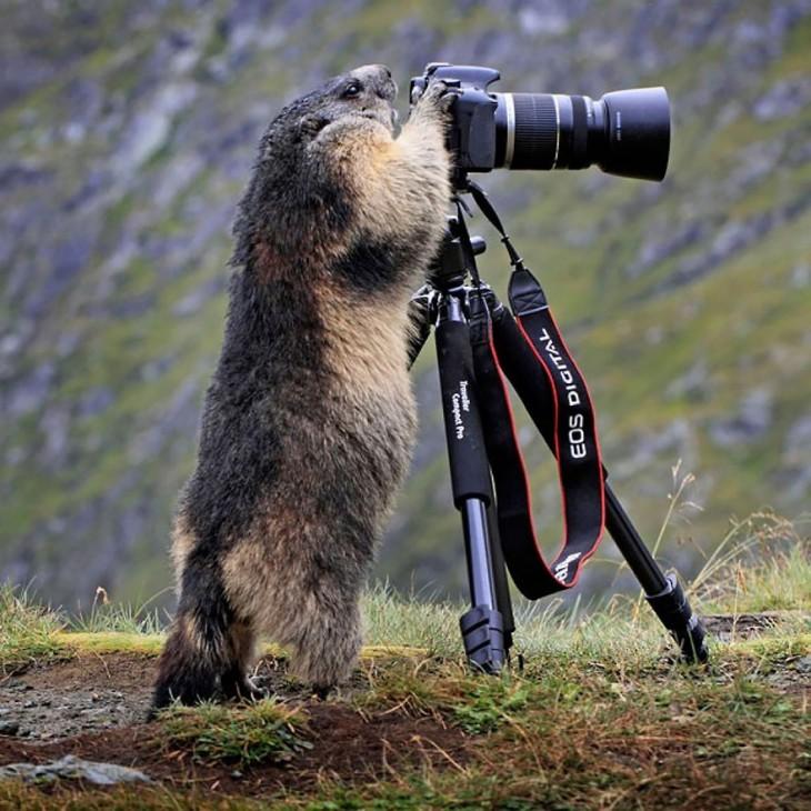 Animal parado queriendo tomar una foto de una cámara que esta sostenida en un tripie