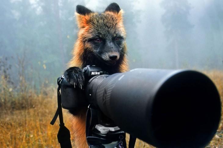 Un pequeño zorro detrás de una cámara simulando que va a tomar una foto