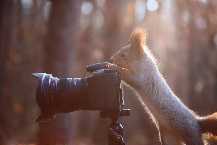 Ardilla a punto de tomar una foto