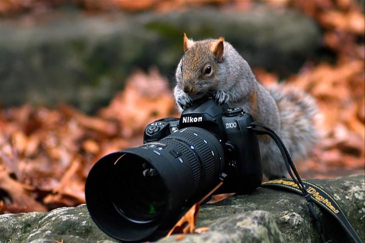 ardilla sobre una roca con una cámara fotográfica en sus patas