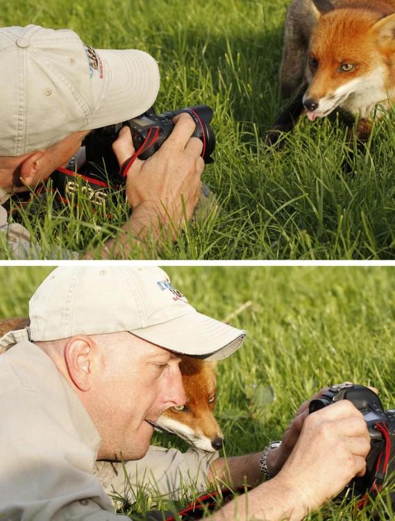 Fotografía dividida en dos partes de un fotógrafo con un zorro