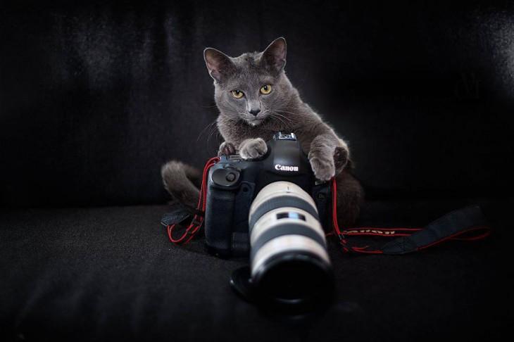 Gato de color gris sentado en un sillón con una cámara fotográfica entre sus patas