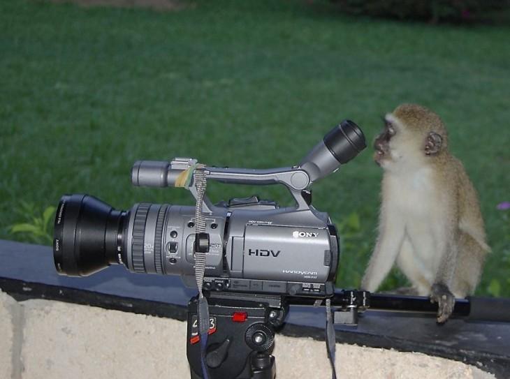 Chango sobre una pequeña barda frente a una cámara donde simula estar grabando