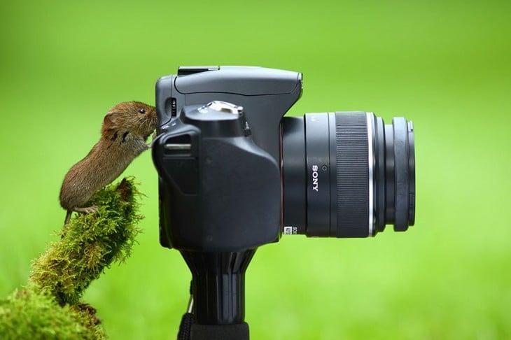 Un pequeño ratón frente a una cámara fotográfica