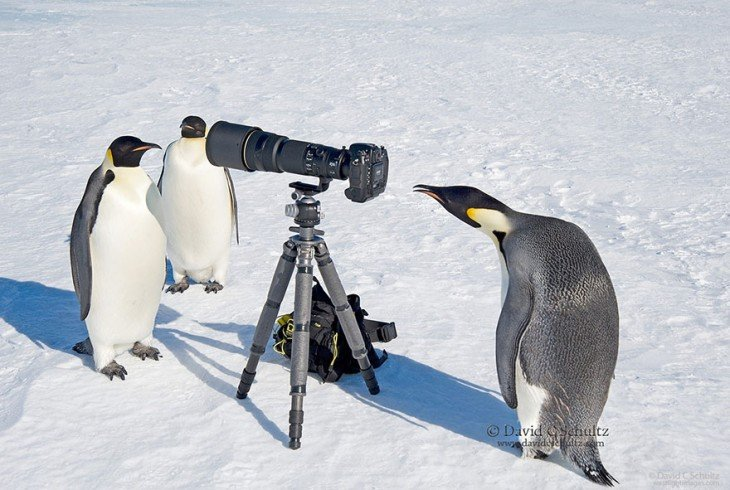 Pingüinos alrededor de una cámara fotográfica