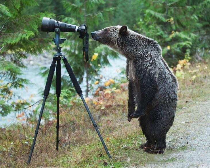 Oso parado detrás de una cámara