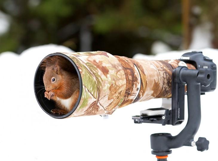 ardilla dentro de un lente de una cámara