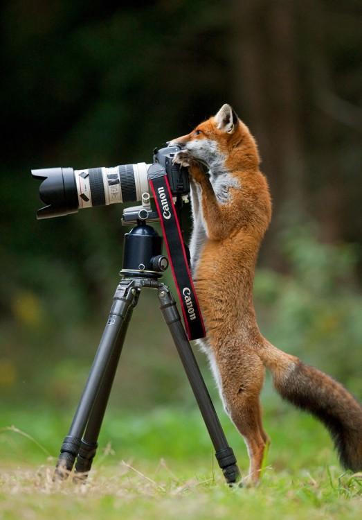 un zorro parado detrás de una cámara sobre un tripie