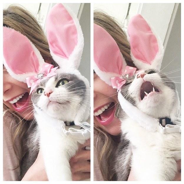 gato disgrazado de conejito esta molesto con su dueaña