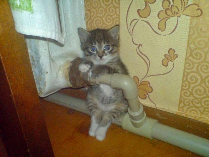 gato asustado tomado de la tuberia en una casa