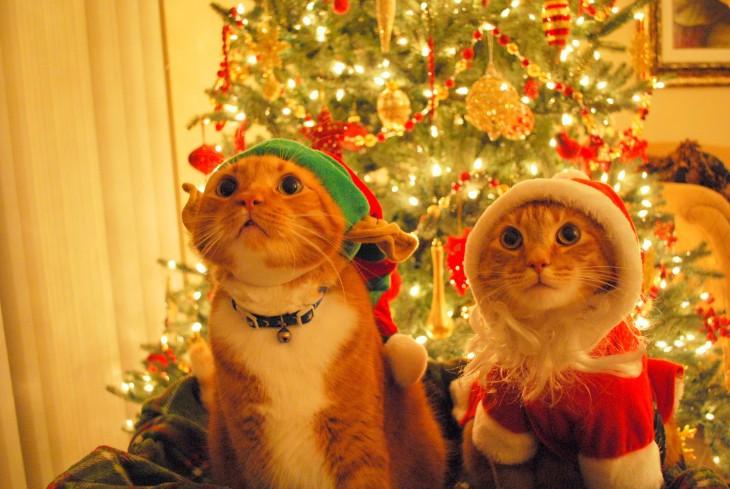 gatos posando con ropa navidelña frente al arbol de navidad
