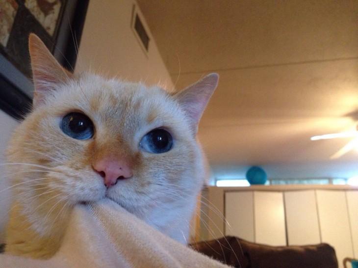 gato mordiendo la ropa de su dueña arriba del sillon